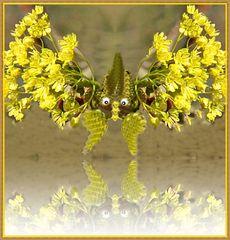 Der Blütenkrebs kann übers Wasser laufen