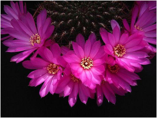 Der Blütensaum