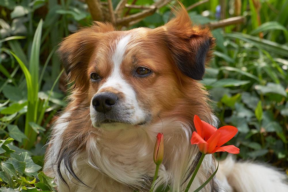 Der Blumenhund