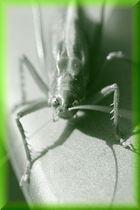 der böse Blick einer schönen Kreatur