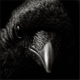 Tiere in schwarz