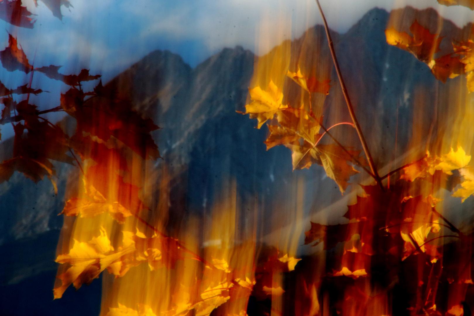 der brennende Baum
