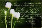 ~ Der Brief ~