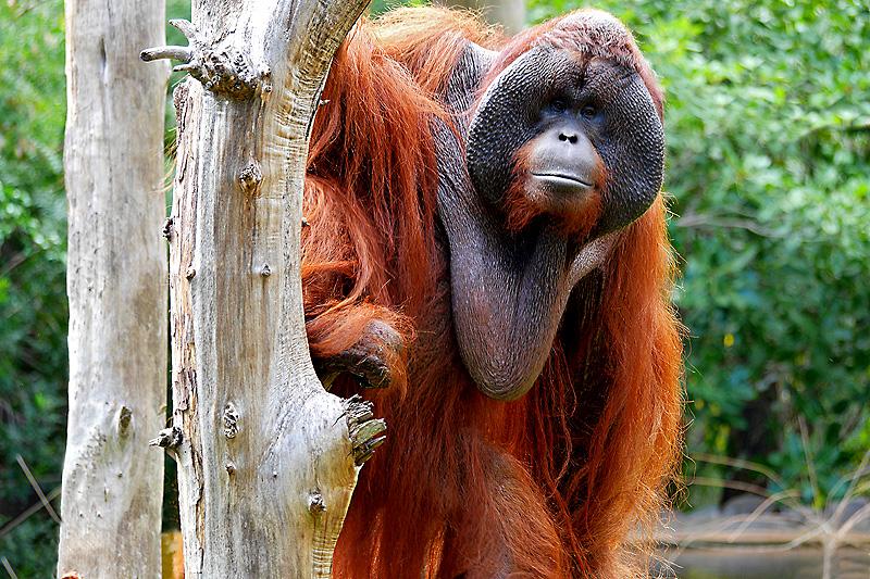Der Bruder aus dem Regenwald...