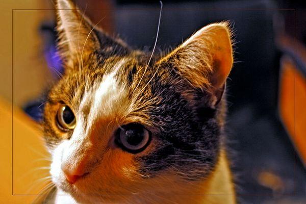 der bruder meiner katze