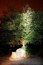 Der Brunnen unter dem Baum
