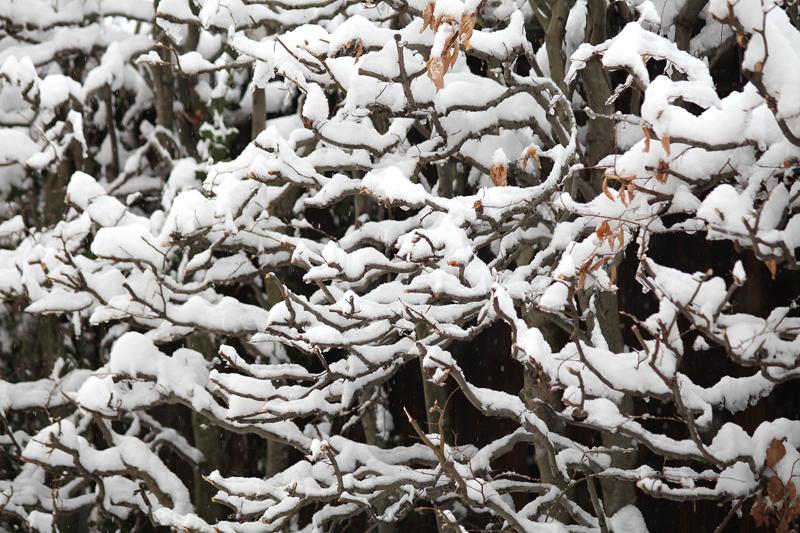 Der Buchenhag im Winterkleid!