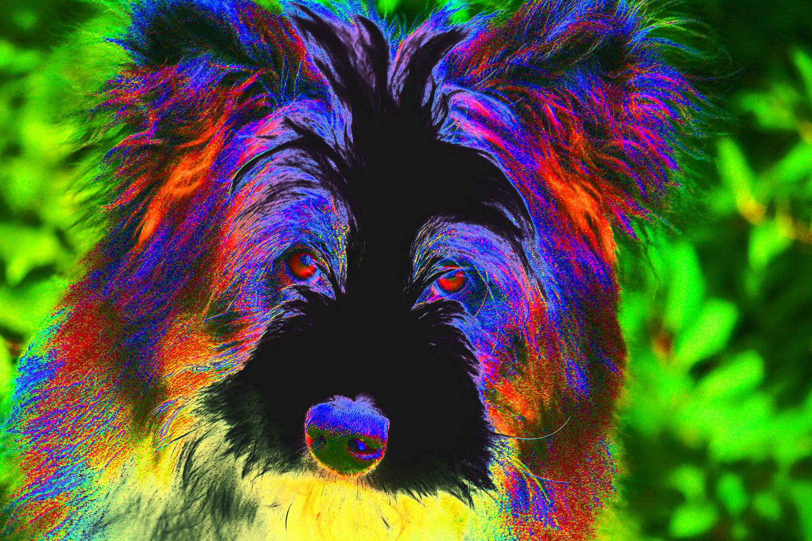 Der bunte Hund