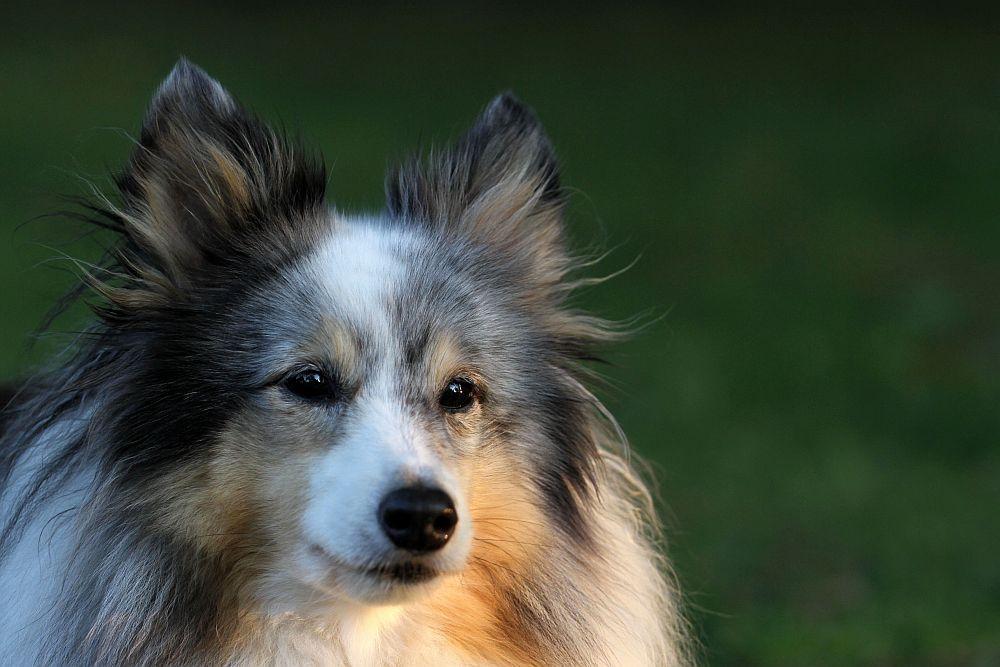 Der bunte Hund wird 10 :-))