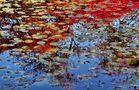 Der Bunte Teich