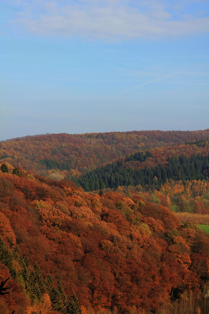 Der Burgholz im Herbst