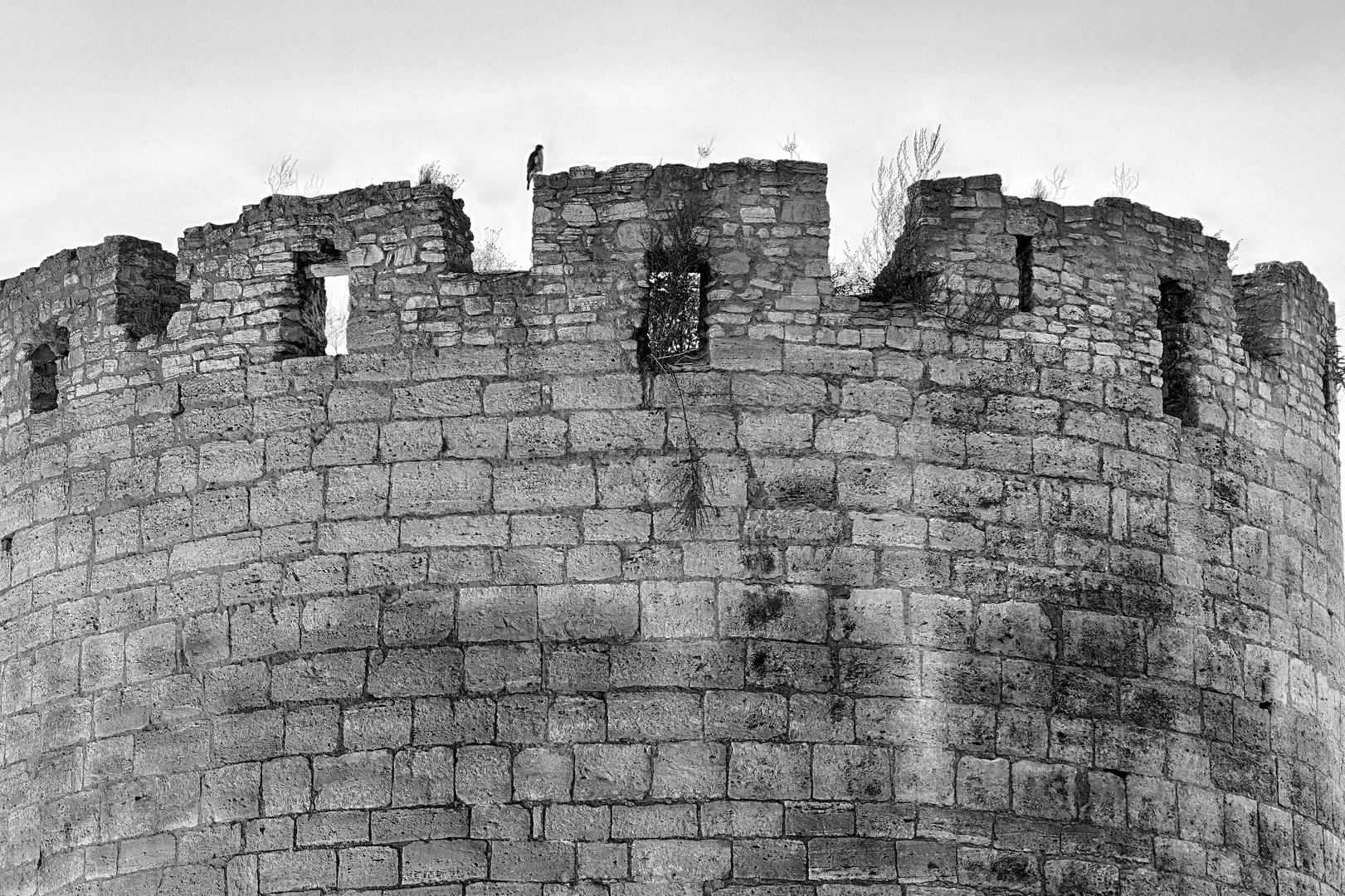 Der Burgwächter