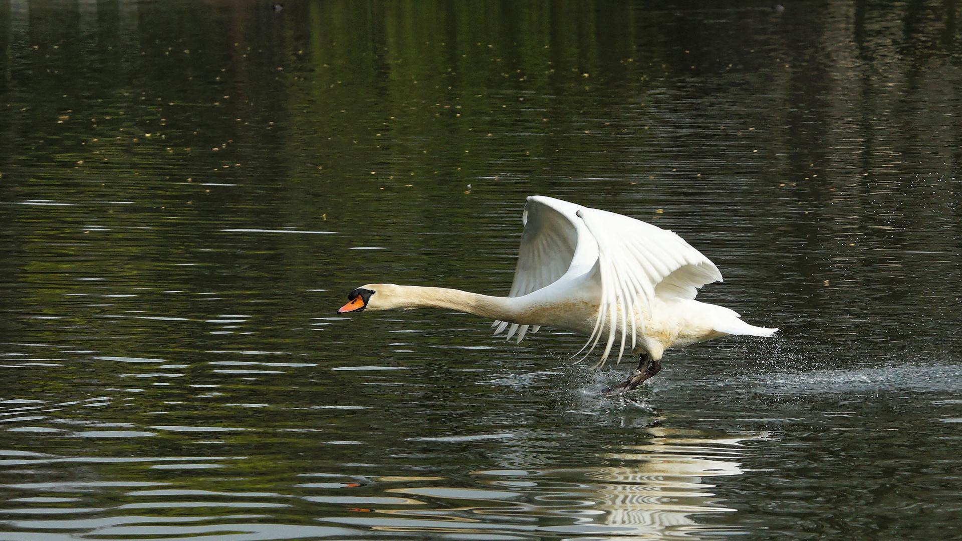 Der Chef am Teich