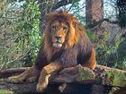 Der Chef vom Duisburger Zoo