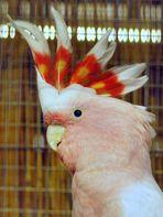 der Chirokese unter den Vögeln