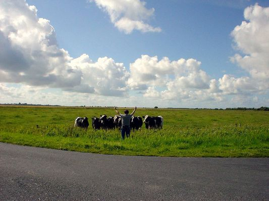 ... der Chor der Kühe (inkl. Dirigent)