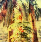 der christbaum