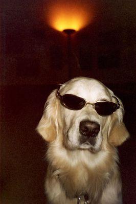 der coolste Hund auf Erden