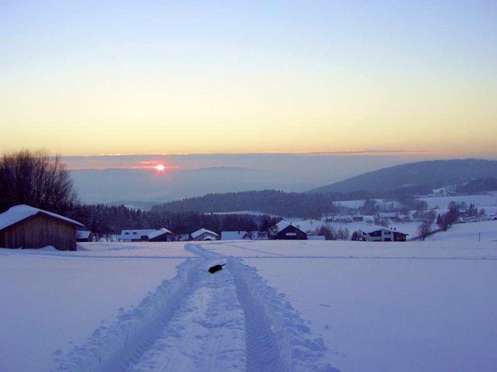 Der Dackel im Schnee
