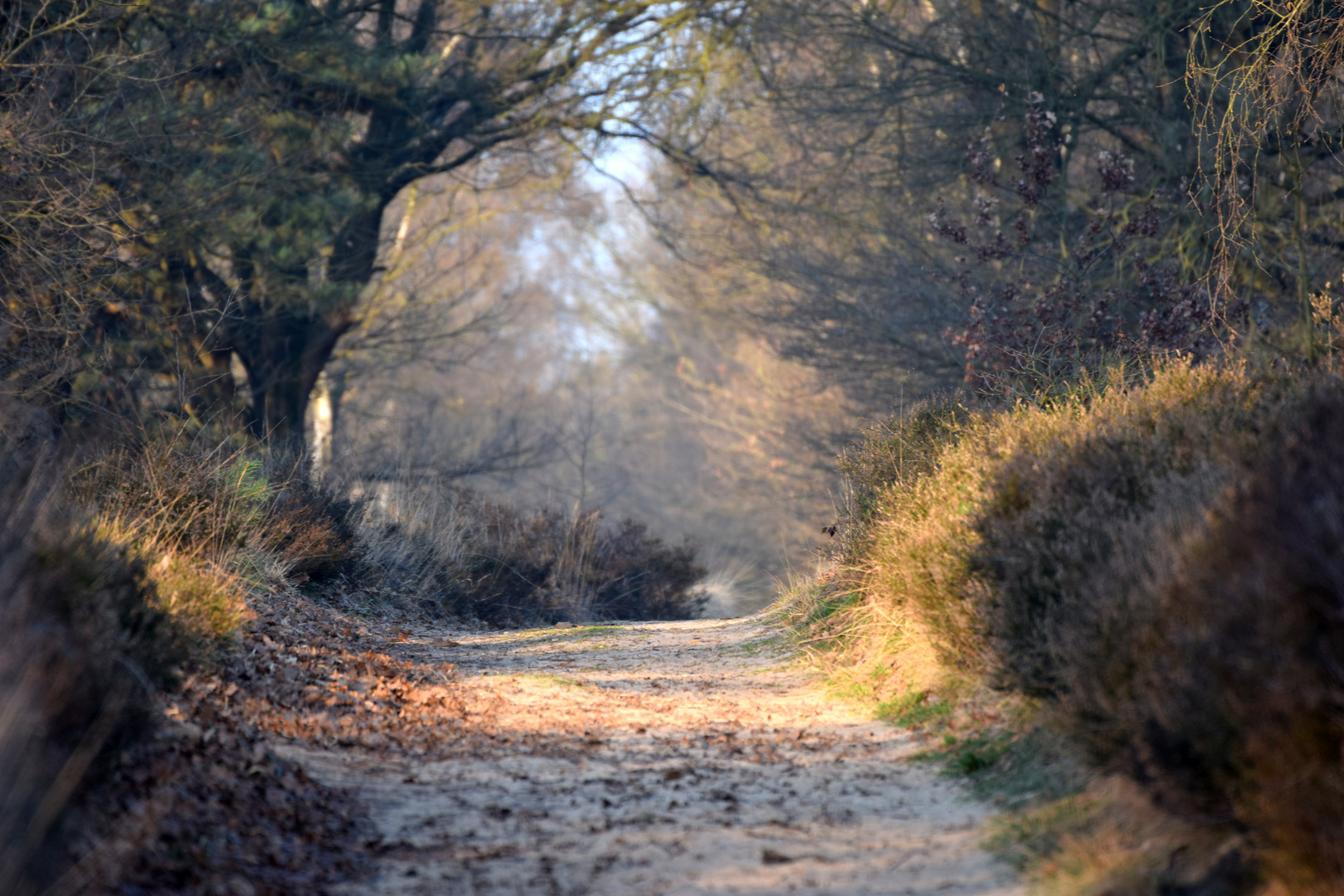 Der De Meinweg in Holland