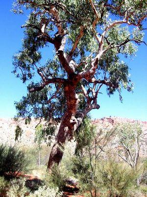 Der den sie Baum nannten