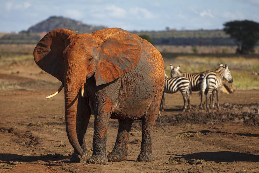 Der Dicke und die Zebrastreifen