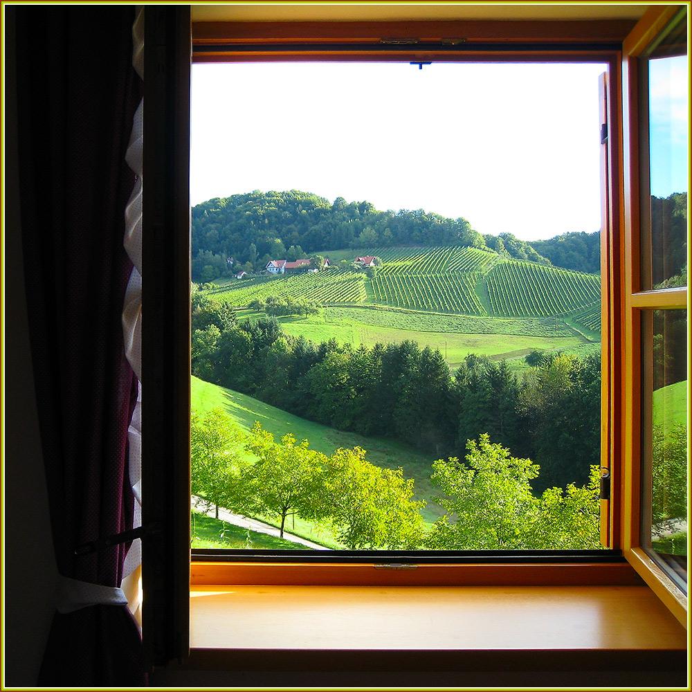 Der direkte Blick aus dem Zimmer in die Weinberge - was gibts schöneres?