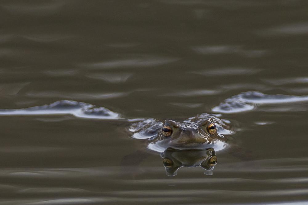 der doppelte Frosch