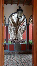 Der Drachenbaum im Rathaus