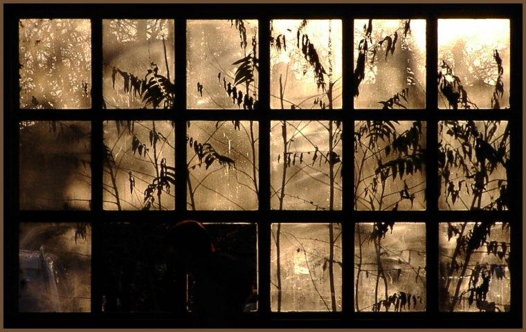 Der Dschungel vor der Haustür ...