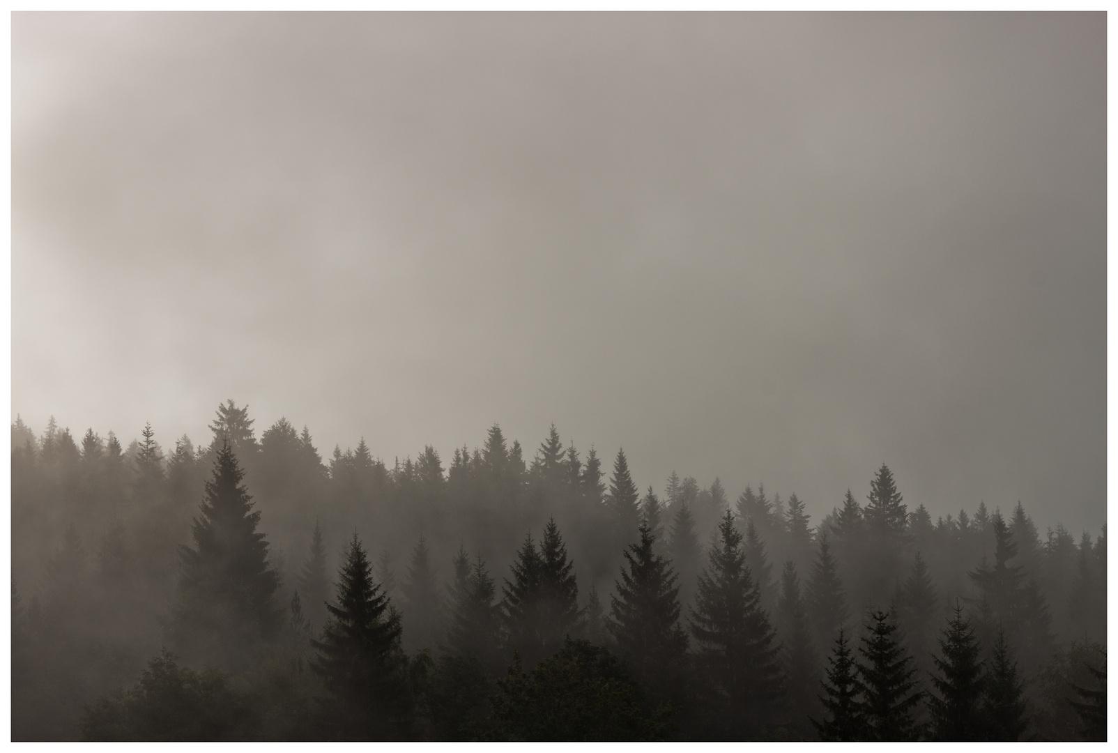 Der Düsterwald