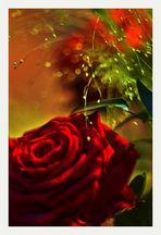 *Der Duft der Rose*