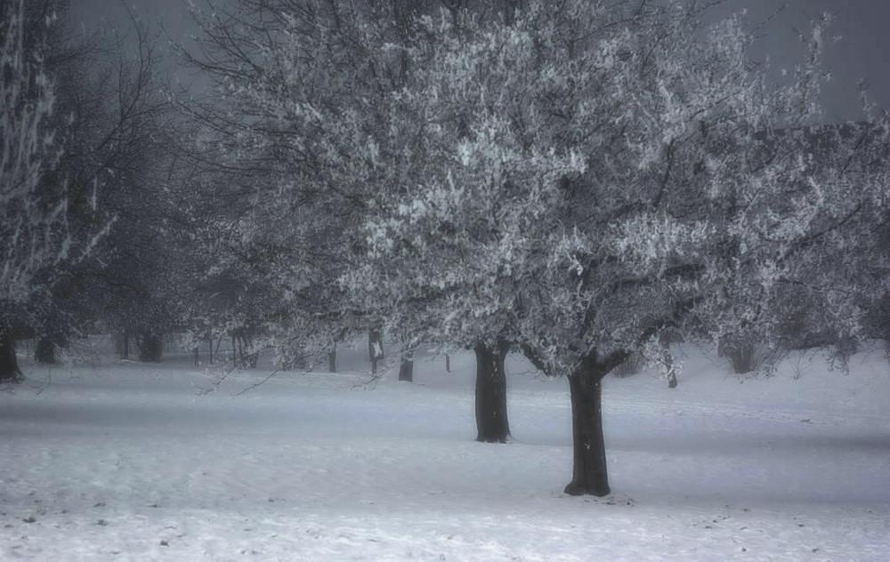 der Duft des Winters