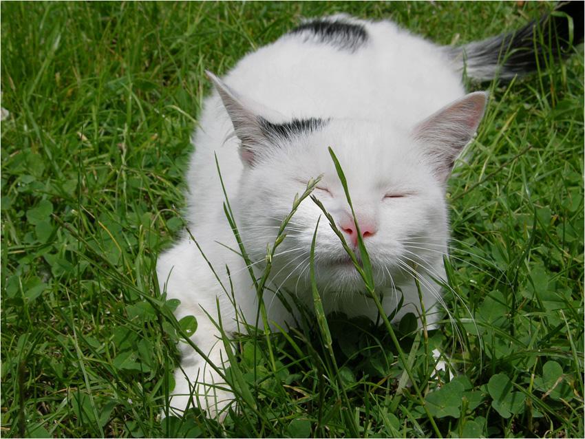 Der Duft von frischem Gras ...