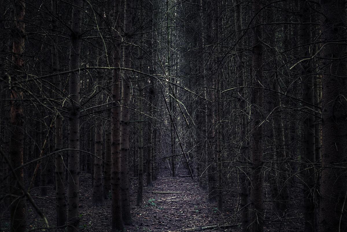 Der dunkle Wald