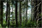 Der durch den Wald guckt