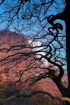 Der Durchblick machts...Blick zum Königsstuhl