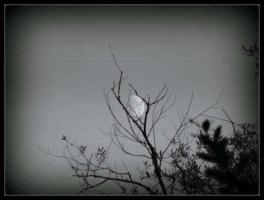 Der eingefangene Mond