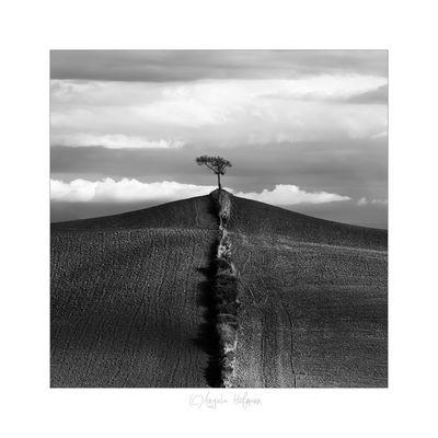 Der einsame Baum ..
