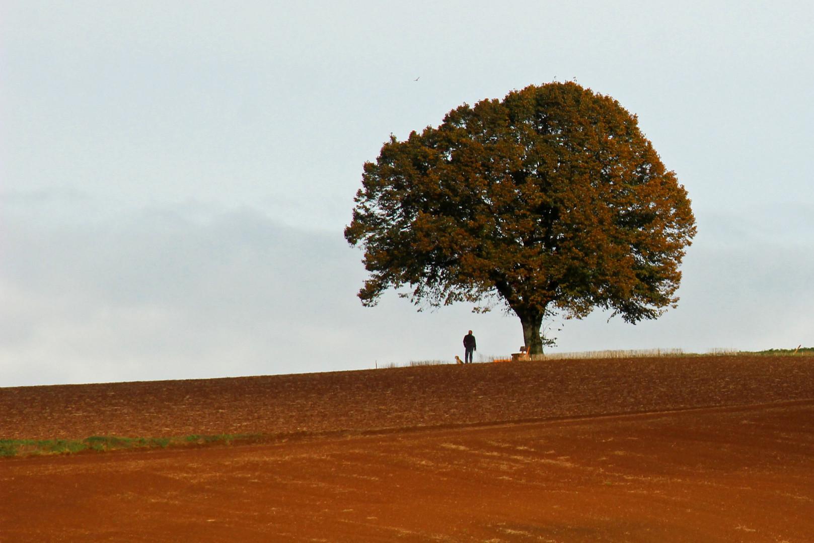 ~ Der einsame Baum ~