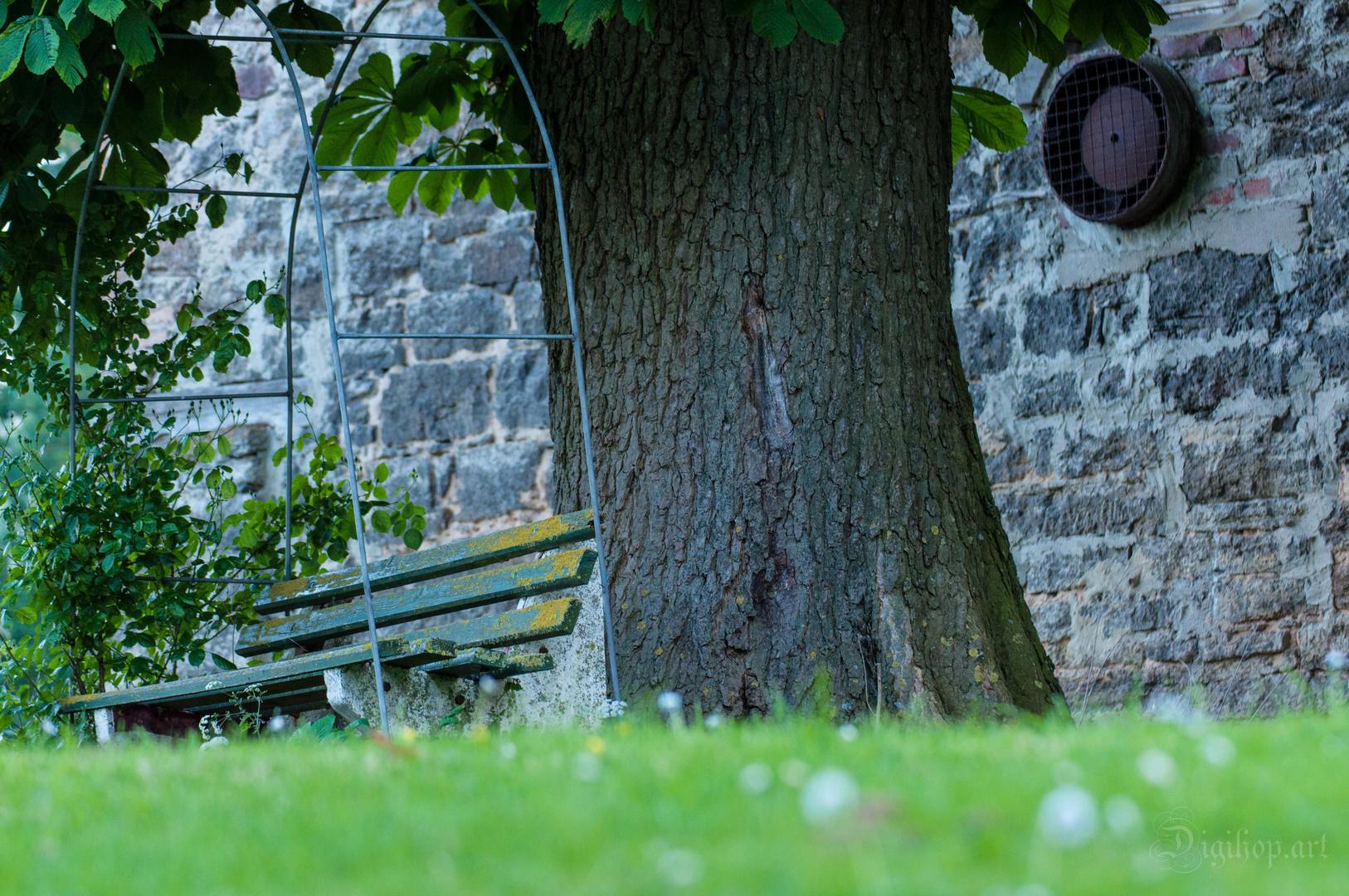 Der einsame Baum.