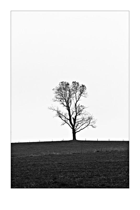 ...der einsame Baum