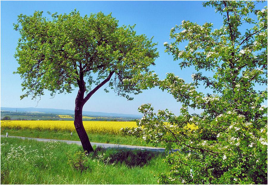 Der einsame Baum am Weg