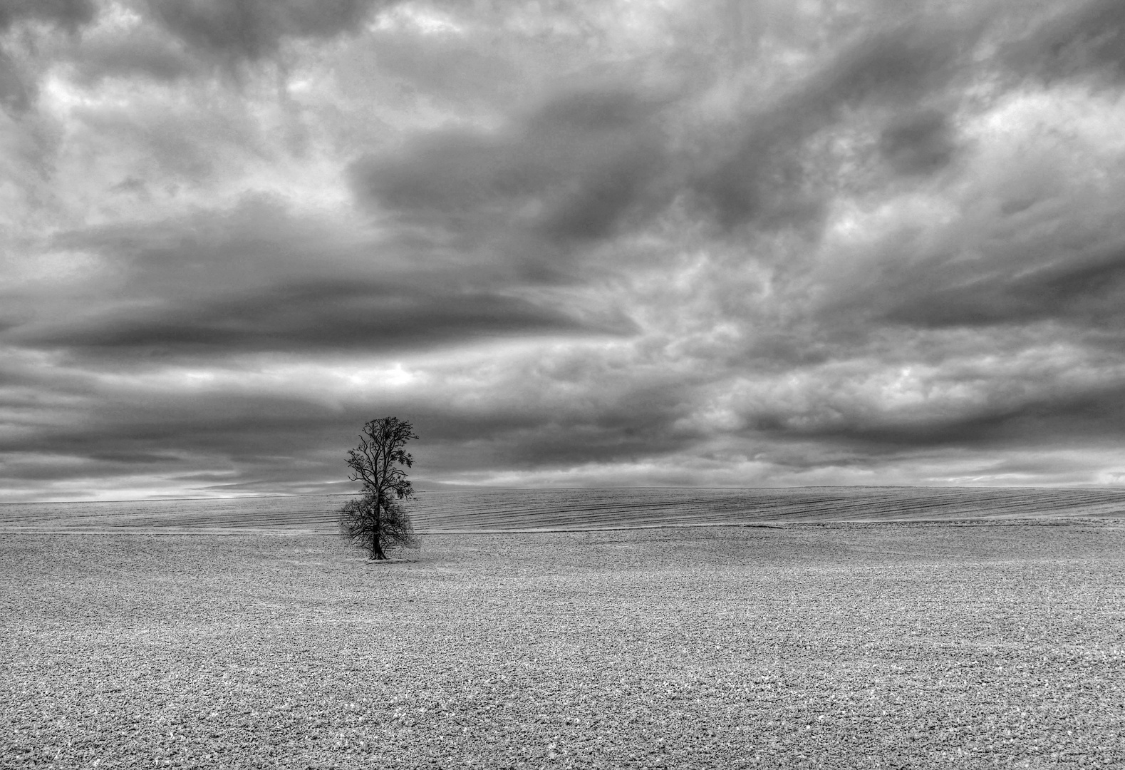 * Der einsame Baum *