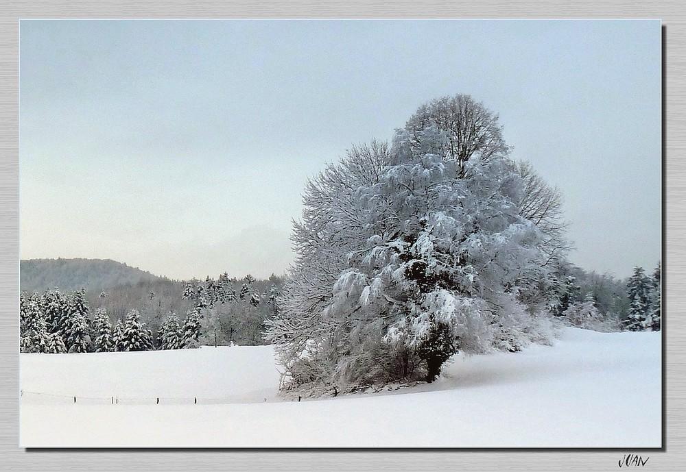 der einsame Baum im Winterkleid
