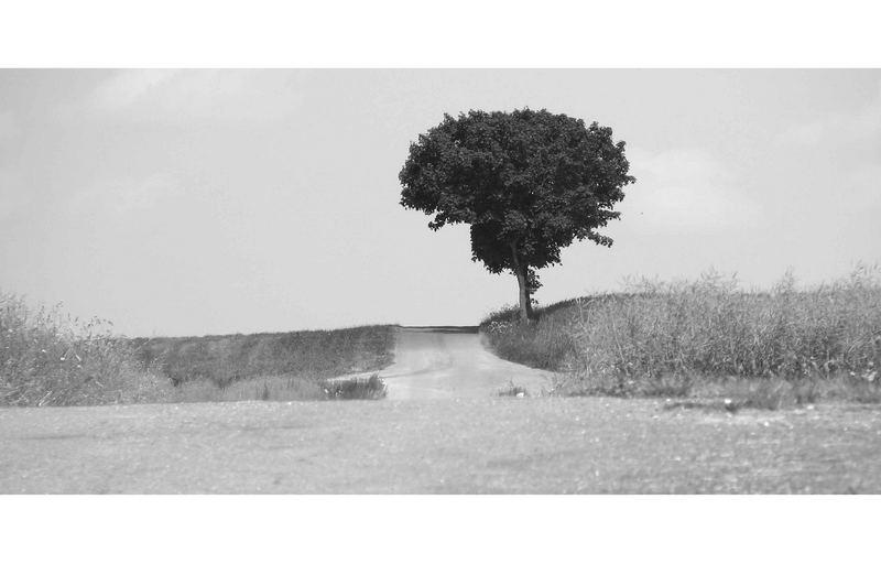 Der einsame Baum (reload)