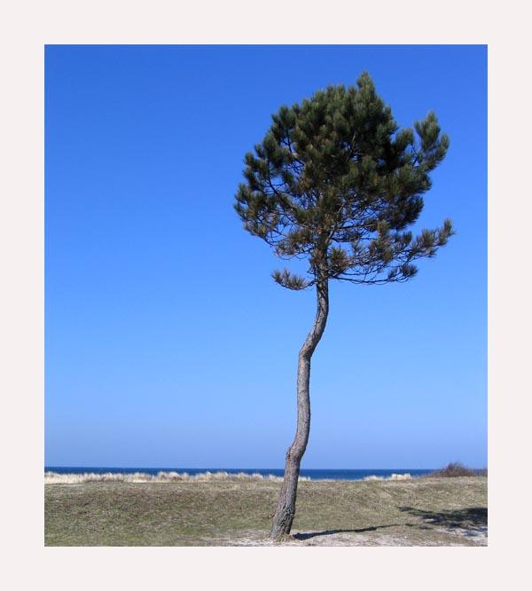 Der einsame Baum und das Meer