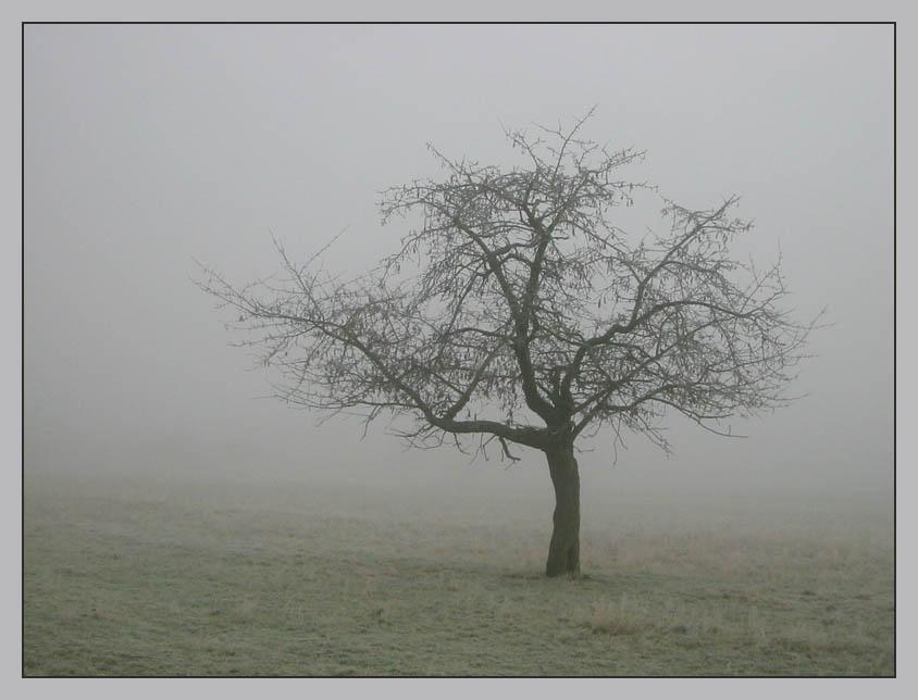 Der einsame Baum und der Nebel