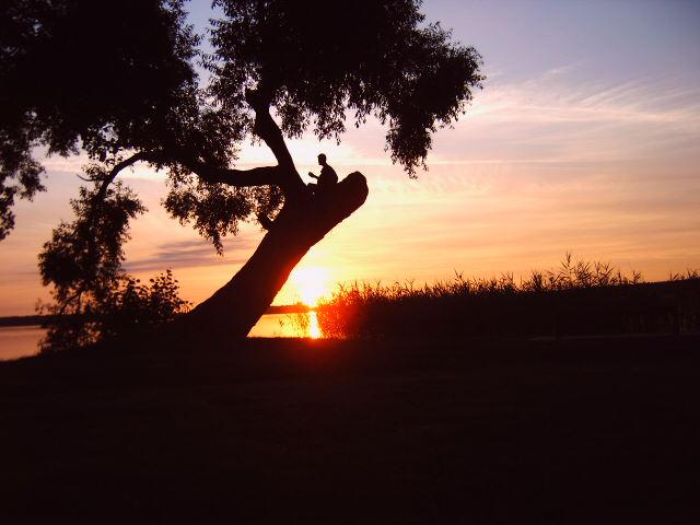 Der einsame Gitarrenspieler auf dem Baum