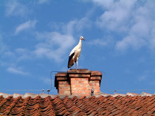 Der einsame Storch